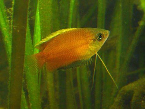 Honig Aquarium Haustierbedarf Aquarien