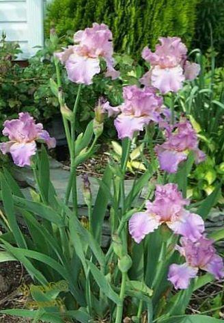 Kukka Luettelo