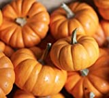 photo: buy Jack Be Little Pumpkin Seeds - Mini Pumpkins - 10+ Premium Heirloom Seeds - ON SALE! - (Isla's Garden Seeds) - Non Gmo - 85% Germination! - Total Quality online, best price $6.99 new 2018-2017 bestseller, review
