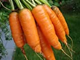 photo: buy Carrot Seeds- Scarlet Nantes online, best price $4.99 new 2018-2017 bestseller, review