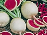 photo: buy Green Leaf ® *Watermelon Red Radish 250 + Seeds GARDEN FRESH PACK online, best price $2.98 new 2018-2017 bestseller, review
