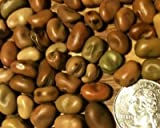 photo: buy David's Garden Seeds Bean Fava Sweet Lorane SL0006 (Brown) 50 Organic Seeds online, best price $9.49 new 2018-2017 bestseller, review