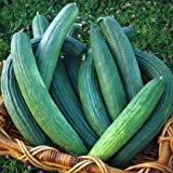photo: buy David's Garden Seeds Cucumber Slicing Armenian Dark Green SRL124 (Green) 50 Heirloom Seeds online, best price $8.45 new 2019-2018 bestseller, review