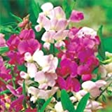 photo: buy Outsidepride Sweet Peas Pearl Mix - 250 Seeds online, best price $5.69 new 2018-2017 bestseller, review