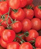 photo: buy Cherry Sweetie Organic Tomato 200 Seeds By Jays Seeds online, best price $5.99 new 2018-2017 bestseller, review