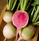 photo: buy David's Garden Seeds Radish Red Meat (Watermelon) D624A (Red) 200 Open Pollinated Seeds online, best price $8.49 new 2017-2016 bestseller, review