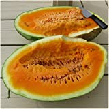 photo: buy Package of 20 Seeds, Orangeglo Watermelon (Citrullus lanatus) Non-GMO Seeds By Seed Needs online, best price $3.65 new 2018-2017 bestseller, review