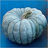 photo: buy Package of 10 Seeds, Blue Moon Pumpkin (Cucurbita maxima) Non-GMO Seeds by Seed Needs online, best price $3.50 new 2018-2017 bestseller, review