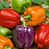 photo: buy Organic Rainbow Mix Pepper 150 Seeds #98182 Item Upc#650348692605 Each color has its own distinctive flavor online, best price $1.55 new 2018-2017 bestseller, review