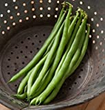 photo: buy David's Garden Seeds Bean Bush Jade G016H (Green) 100 Open Pollinated Seeds online, best price $8.65 new 2019-2018 bestseller, review