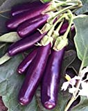 photo: buy Eggplant , Long Purple Eggplant seeds, Heirloom, Organic, Non Gmo, 25 seeds, Garden Seed, Long Purple, Heirloom, Organic, Non Gmo, 25+seeds, Garden Seed online, best price $1.98 new 2018-2017 bestseller, review