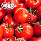 photo: buy Early Girl Tomato Seeds - 25 Seeds Non-GMO online, best price $3.25 new 2018-2017 bestseller, review
