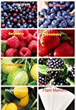photo: buy Lemon & More Fruit Combo Pack Raspberry, Blackberry, Blueberry, Strawberry, Hucklberry, Meyer Lemon, Eureka Lemon (Organic) 760+ Seeds UPC 788045382298 + 7 Free Plant Markers online, best price $7.99 new 2019-2018 bestseller, review