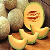 photo: buy Hot Sale 50 Seasons cantaloupe melon seed sowing vegetable seeds fruit seed planting sweet crispy balcony free shipping online, best price $4.98 new 2017-2016 bestseller, review