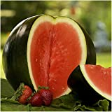 photo: buy Package of 100 Seeds, Sugar Baby Watermelon (Citrullus lanatus) Seeds by Seed Needs online, best price $3.65 new 2018-2017 bestseller, review