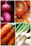 photo: buy Organic Short Day Onion 2 Pack Onion Seeds 800 Seeds UPC 656793277213 Red Cipollini Onion, Yellow Sweet Spanish, Evergreen Bunching online, best price $12.00 new 2018-2017 bestseller, review