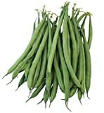 photo: buy Burpee French Filet Bush Bean Seeds 2 ounces of seed online, best price $9.69 new 2019-2018 bestseller, review