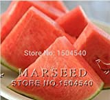 photo: buy Mr.seeds 10 watermelon Seeds Seedless watermelon sweet&juice very tasty easy-growing online, best price $10.00 new 2018-2017 bestseller, review