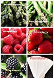 photo: buy Organic New Bulk 2 Asparagus Seeds Survival Seeds 540+ Seeds Bonus Fruit Seeds Upc 650327337718 + 5 Plant Markers Jersey Mary Washington Raspberry Strawberry online, best price $6.59 new 2017-2016 bestseller, review