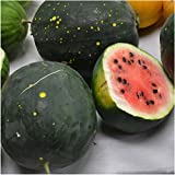 photo: buy Package of 20 Seeds, Watermelon Van Doren Moon & Stars (Citrullus lanatus) Non-GMO Seeds By Seed Needs online, best price $3.65 new 2018-2017 bestseller, review