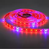 photo: buy 5050 Super Bright Aquarium Coral LED Strip Light 5M 300LEDs Spool Waterproof LED Plant Grow String Lights DC 12V Blue + Red Color String light (5Red 1Blue) online, best price $14.99 new 2019-2018 bestseller, review