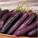 photo: buy Package of 100 Seeds, Long Purple Eggplant (Solanum melongena) Non-GMO Seeds By Seed Needs) online, best price $3.50 new 2018-2017 bestseller, review
