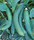 photo: buy Heirloom Suyo Long Cucumber Seed by Stonysoil Seed Company CERTIFIED ORGANIC SEEDS online, best price $7.95 new 2018-2017 bestseller, review