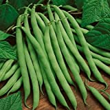 photo: buy David's Garden Seeds Bean Bush Blue Lake 274 30085A (Green) 100 Heirloom Seeds online, best price $8.49 new 2018-2017 bestseller, review