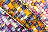 photo: buy 20 Glass Gem Indian Corn Seeds by RDR Seeds online, best price $4.99 new 2018-2017 bestseller, review