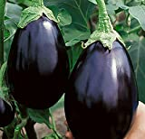 photo: buy Black Beauty Eggplant Seed - 300 Heirloom Seeds - Non GMO - Neonicotinoid-Free online, best price $7.99 new 2018-2017 bestseller, review