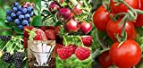 photo: buy Fruit Combo Pack Raspberry, Blackberry, Blueberry, Strawberry, Apple, Tomato (Organic) 675+ Seeds 650327337305 Self Fertile + 6 Free Plant Markers online, best price $6.99 new 2018-2017 bestseller, review
