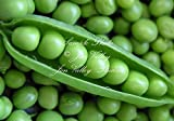 photo: buy Early Alaska Heirloom Pea 250 Seeds Tender and Sweet Loves cool weather produces abundantly & earlier than most online, best price $4.99 new 2018-2017 bestseller, review