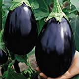 photo: buy Everwilde Farms - 250 Black Beauty Eggplant Seeds - Gold Vault Jumbo Seed Packet online, best price $2.50 new 2019-2018 bestseller, review