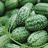 photo: buy Mexican Miniature Watermelon Seeds ► Organic 'Cucamelon' Mini Sour Gherkin Seeds (15+ Seeds) ◄ by PowerGrow Systems online, best price  new 2018-2017 bestseller, review