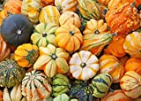 photo: buy Rare Seeds Pumpkin Decorative Mix Organically Grown online, best price $2.00 new 2018-2017 bestseller, review
