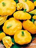 photo: buy Mouse over image to zoom Details about COURGETTE PATISSON SUMMER SQUASH SUNBURST YELLOW PATTY PAN 10 ORGANIC seeds online, best price $9.99 new 2018-2017 bestseller, review