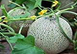 photo: buy original package of Japan Maite melon Seeds 100 pcs Seeds per bag Green fruit seeds hami melon seeds online, best price $12.87 new 2018-2017 bestseller, review