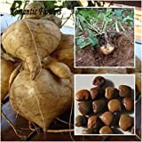 photo: buy Hot Sale!!! Very Sweet Fruit And Vegetable Plants,High-Yield Sweet Potato Seeds,Vegetable Delicious And 20 Particle/ bag online, best price $3.64 new 2017-2016 bestseller, review