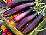 photo: buy Heirloom Organic 600 Seeds Purple Long Eggplant Seed Rare Asian Eggplant Vegetable Fruit Garden Seeds F107 online, best price $2.45 new 2017-2016 bestseller, review