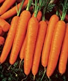 photo: buy 165+ Organic Scarlet Nantes Carrot Seeds - Non GMO - DH Seeds - Includes Free Gift - UPC0787639607984 online, best price $5.29 new 2018-2017 bestseller, review