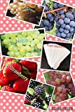 photo: buy Bulk 4 Grape Vine Seeds Survival Seeds 440 Seeds Upc 650327337435 + 6 Plant Markers Strawberry Seeds Blackberry Seeds (PLUS BONUS 2PACK) online, best price $6.39 new 2018-2017 bestseller, review