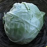 photo: buy Everwilde Farms - 1/4 Lb Golden Acre Cabbage Seeds - Gold Vault online, best price $6.00 new 2017-2016 bestseller, review