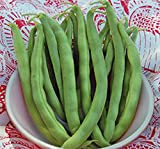photo: buy Bean, Pole Kentucky Wonder Seeds, Organic, NON-GMO, 20+ seeds per package,Hearty Healthy Green Been online, best price $1.40 new 2018-2017 bestseller, review