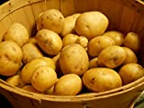 photo: buy SEED POTATOES - 5 lb Yukon Gold * Organic Grown * Non GMO * Virus & Chemical Free * Ready for Spring Planting * online, best price $16.27 new 2017-2016 bestseller, review