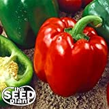 photo: buy Keystone Resistant Sweet Bell Pepper Seeds 150 SEEDS NON-GMO online, best price $1.85 new 2018-2017 bestseller, review