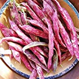 photo: buy David's Garden Seeds Bean Dry Pinto SV139AC (Brown) 100 Heirloom Seeds online, best price $8.45 new 2018-2017 bestseller, review