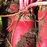photo: buy Everwilde Farms - 1/4 Lb Red Mammoth Fodder Beet Seeds - Gold Vault online, best price $7.20 new 2018-2017 bestseller, review