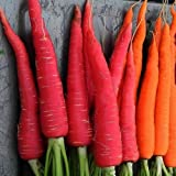 photo: buy Kyoto Red Carrot Seed Packet Approx 300 seeds by Seeds and Things online, best price $5.79 new 2018-2017 bestseller, review