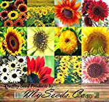photo: buy BIG PACK - SUNFLOWER Sunny Sun Flower CRAZY MIX (1,000+) flower Seeds - Non-GMO Seeds By MySeeds.Co online, best price $13.95 new 2018-2017 bestseller, review