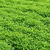 photo: buy Garden Cover Crop Mix Seeds - Blend of Gardening Cover Crop Seeds: Hairy Vetch, Winter Peas, Forage Collards, Winter Rye, Crimson Clover, More (1 Lb Pouch) online, best price $11.95 new 2017-2016 bestseller, review
